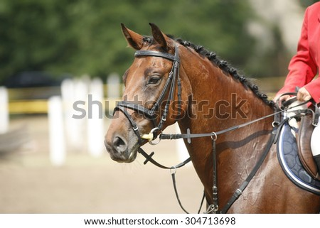 Head-shot of a show jumper horse during competition . Face of a beautiful purebred racehorse on a jumping competition - stock photo
