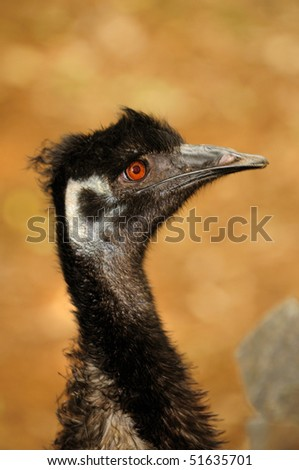 Head shot of ostrich at a local zoo - stock photo
