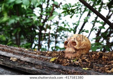 head skull with dry leaves piles on wood ground steps with trees,leaves and branches background (low key filter)