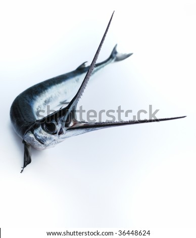 Head with teeth of fish-saw on white background - stock photo
