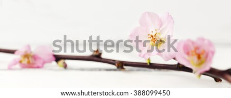 header with a twig of cherry blossom on white wooden background