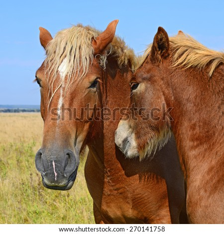 Heads of horses against a pasture - stock photo