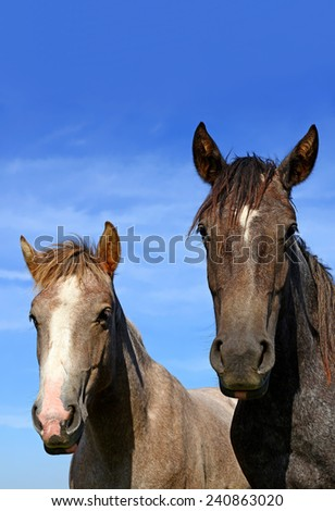 Heads of horses against the sky - stock photo