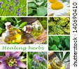 Healing herbs - stock photo