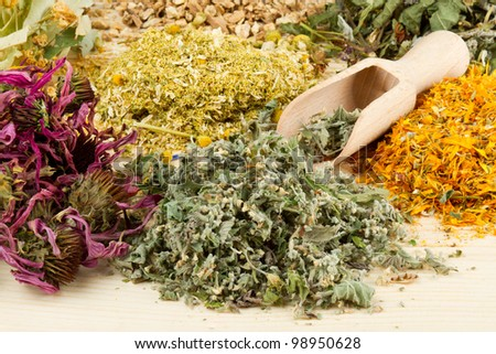 healing herbs with scoop on wooden table, herbal medicine - stock photo