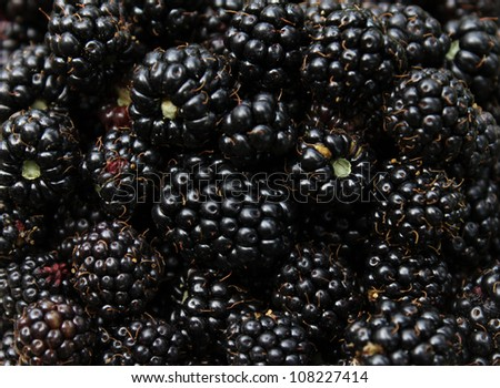 healthy berry fruits, delicious blackberries