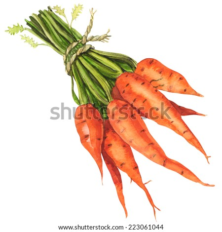 Healthy bunch of organic carrots isolated - stock photo