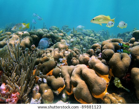 Healthy coral reef with tropical fish underwater in the Caribbean sea