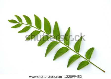 Healthy curry leaves herb on white  background