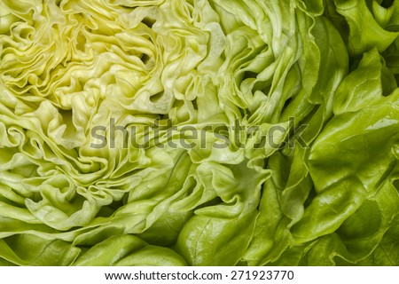Healthy diet concept with macro close up of head of lettuce with empty copyspace. - stock photo