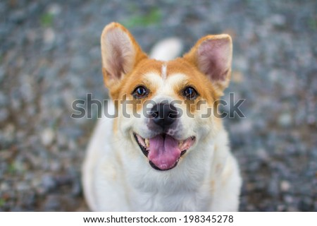 healthy dog smiling - stock photo