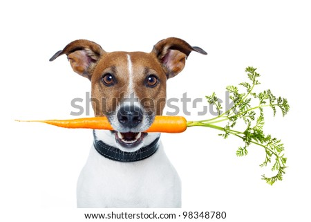 healthy dog with a carrot - stock photo
