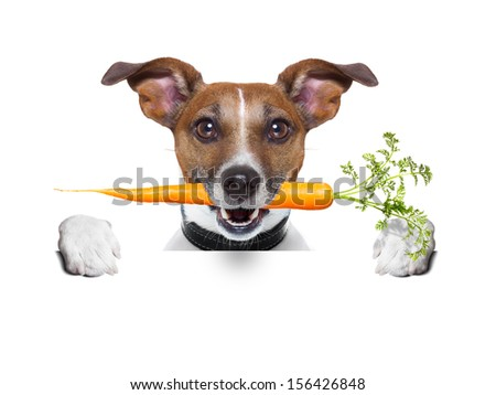 healthy dog with a carrot behind a blank banner