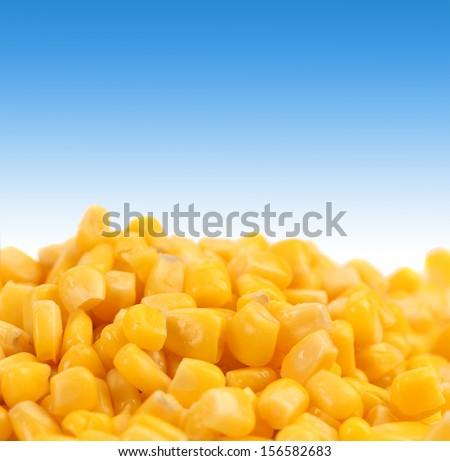 Healthy grain corn close-up. Isolated on a blue background. Place for text.