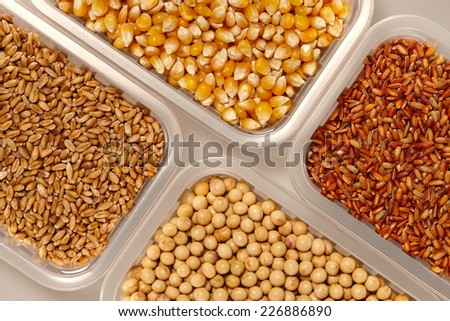 Healthy grain food selection in plastic Bowl on a Grey background. Wheat Corn Rice and Soybeans collection