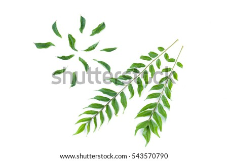 Healthy green curry leaves on white background