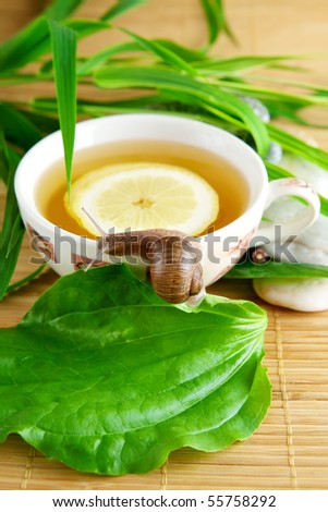 Healthy green tea cup with lemon