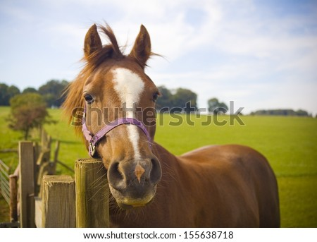 Healthy horse staring directly at the camera, sharp focus on the eyes. - stock photo