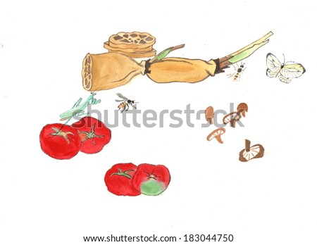 healthy lifestyle--organic food in countryside--tomato,mushroom, lotus root