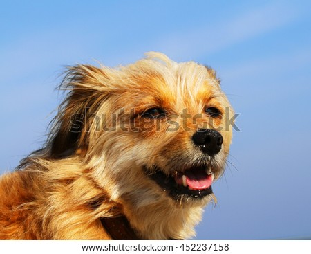 Healthy looking dog portrait - stock photo