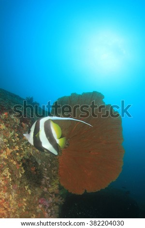 Healthy marine coral reef ecosystem with tropical fish in Similan Islands, Thailand - stock photo