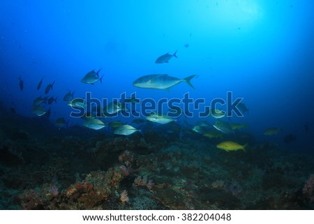 Healthy marine coral reef ecosystem with tropical fish in Similan Islands, Thailand