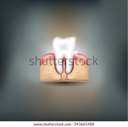 Healthy tooth gums and bone detailed illustration - stock photo