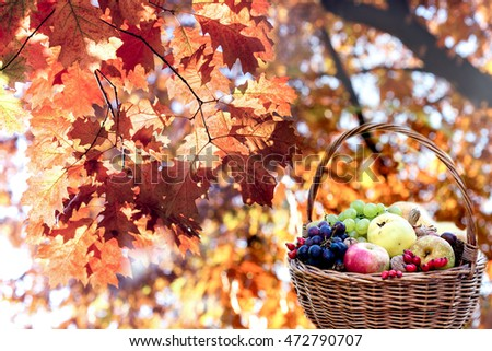 Healty organic seasonal fruits - autumnal fruits in wicker basket