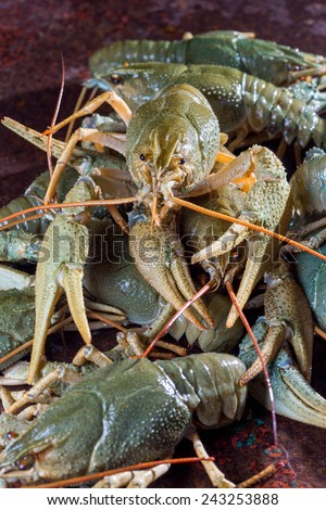 Heap live crayfish on a metal surface - stock photo