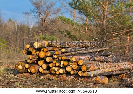 heap of a pine trunks in a forest
