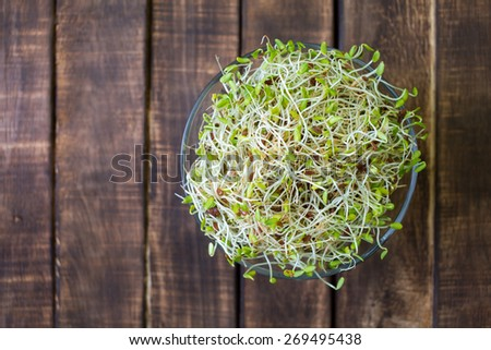 heap of alfalfa sprouts isolated - stock photo