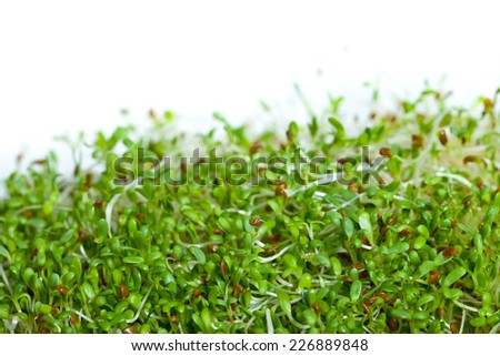 heap of alfalfa sprouts isolated on white - stock photo