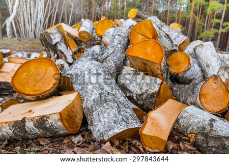 heap of birch logs - stock photo