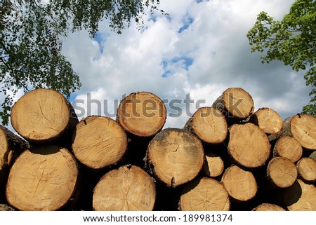heap of cut wood trunk in forest - stock photo