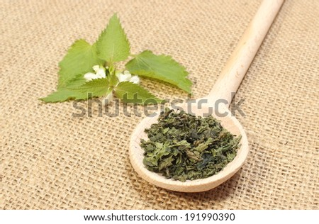 Heap of dried nettle on wooden spoon and fresh stinging nettle with white flower lying on jute canvas - stock photo