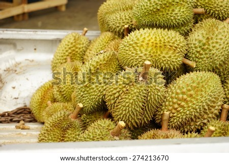 Heap of durians on delivery pick up truck for buffet meal at Rayong Province, Thailand