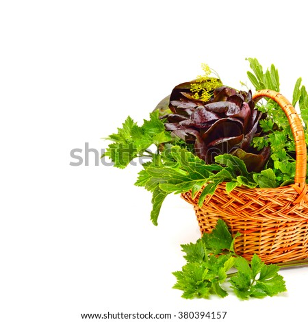 Heap of fresh curly lettuce, water-cress, spinach with parsley in basket isolated on white.