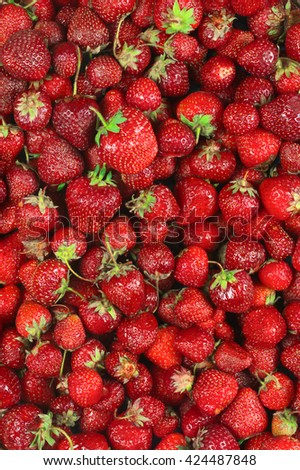Heap of fresh strawberries as background. Top view point.