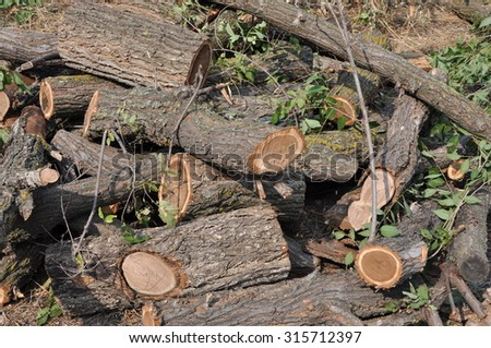 Heap of just cut tree trunks with left twigs, branches and leaves on a sunny day.
