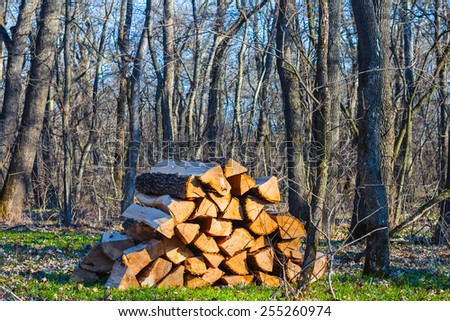 heap of oak firewoods in a forest - stock photo