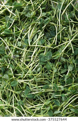 heap of organic and freshly harvested snow pea shoots or sprouts as food background, top view, vertical - stock photo