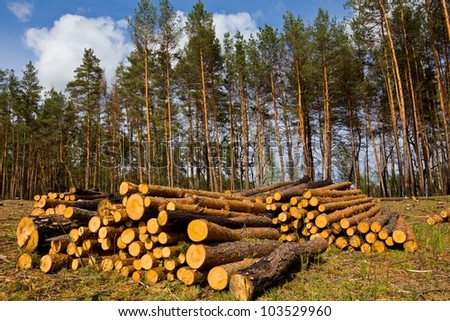 heap of pine tree trunks on a forest glade - stock photo