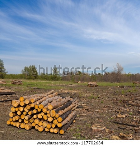 heap of pine trunks in a forest - stock photo