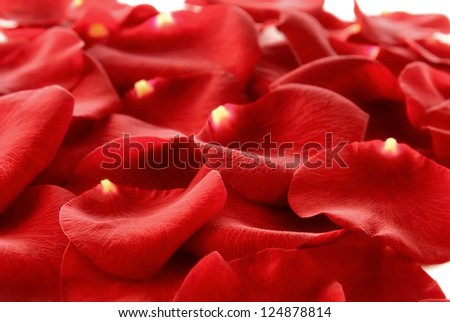 Heap of red rose petals covering the frame - studio shot with shallow focus