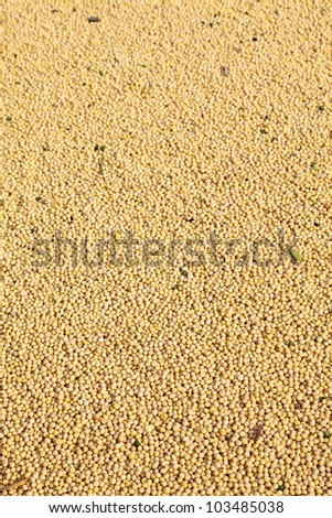 Heap of soy bean after harvest, selective focus - stock photo