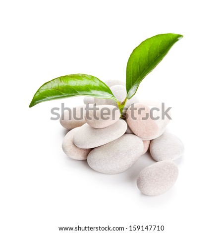 heap of stones and green leaves isolated on whine background - stock photo