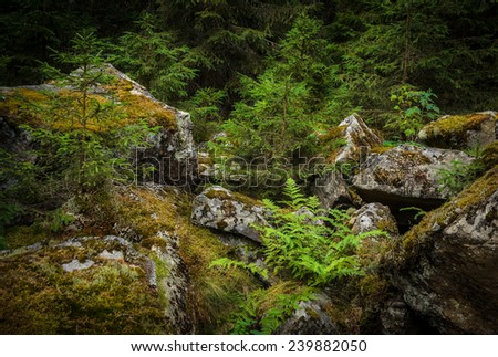 heap of the granite stones in moss - stock photo