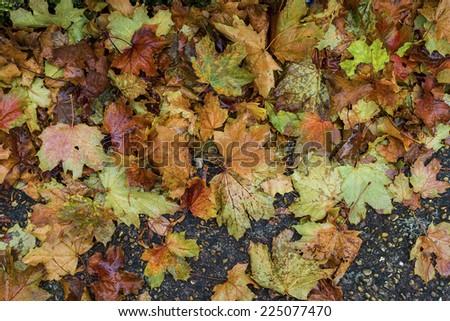Heap of vivid fallen autumn leaves on alley - stock photo