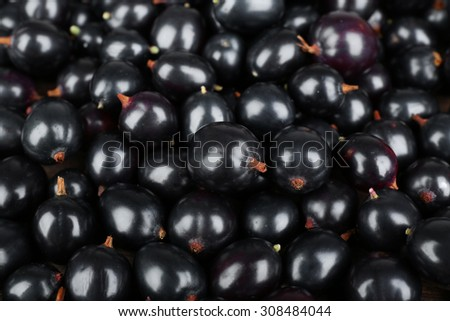 Heap of wild black currant close up