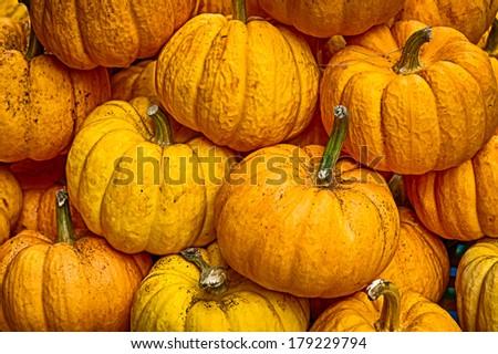 Heap of yellow pumpkins - stock photo
